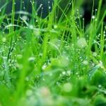 green003