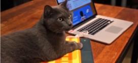 火辣辣鍵盤 貓咪暖上Hot Keyboard