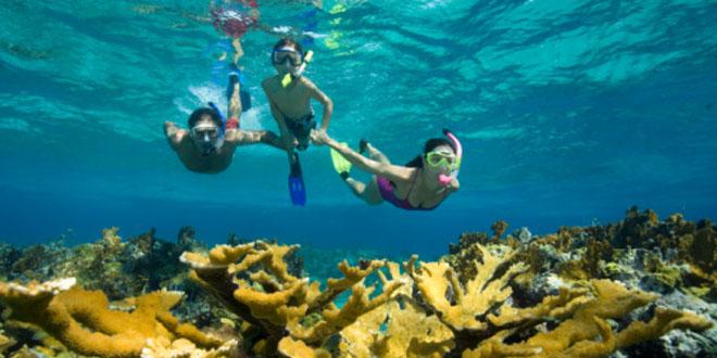 浮潛最佳拍檔RICOH極限相機 水中生物逐個捉