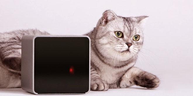 Petcube寵物攝影機 摰愛遠在天邊近在眼前