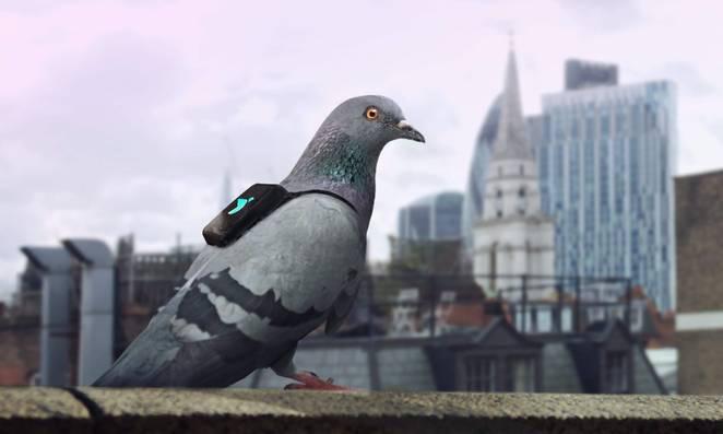 Pigeon Air Patrol01
