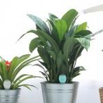PlantSitter00