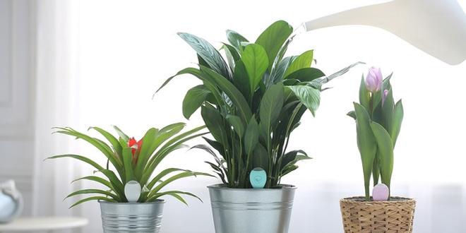 想知植物諗咩?盆栽達人PlantSitter代花草發聲