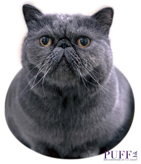 catcat04