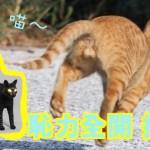 cat_balls copy